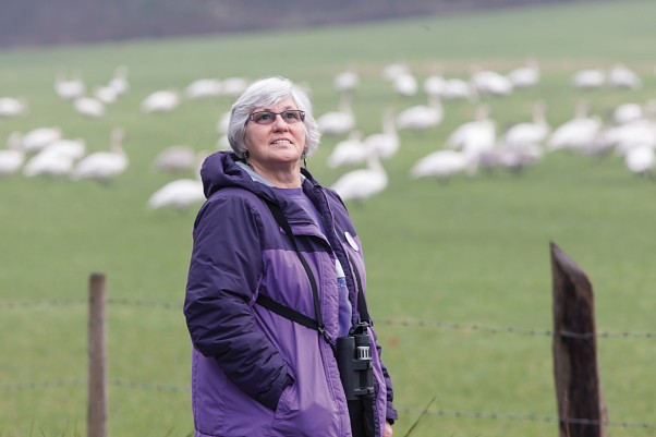 Every week from October to the end of March volunteers like Steph Nathan travel to 21 different Valley locations to count swans.