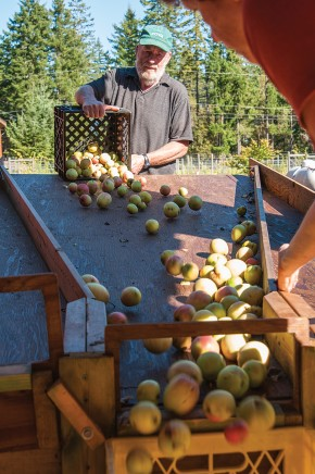 Scrumpy's, which presses apples, pears and grapes into juice for customers, can process up to 4,000 pounds of fruit per day.  Photo by Lisa Graham www.seadance.ca